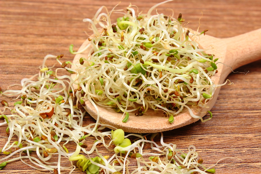 Alfalfa Sprouts - An Easy Way to add Greens to Your Diet - FNPA